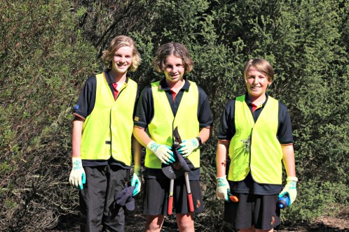 Students worked in small groups to remove Coastal Tea Tree from the affected areas at Whites Beach.