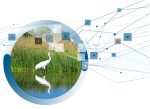 Wetlands Expertise page