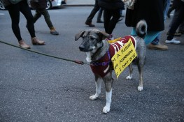 A four legged marcher wears a sign poses for a photo during a march in New York, Jan. 29, 2017, protesting President Donald Trump's immigration order. (Gordon Donovan/Yahoo News)