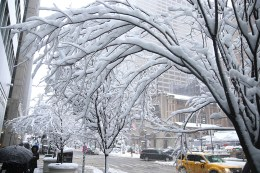 Snow covers trees on Park Avenue mall on Feb. 9, 2017, in New York during a winter storm. (Gordon Donovan/Yahoo News)