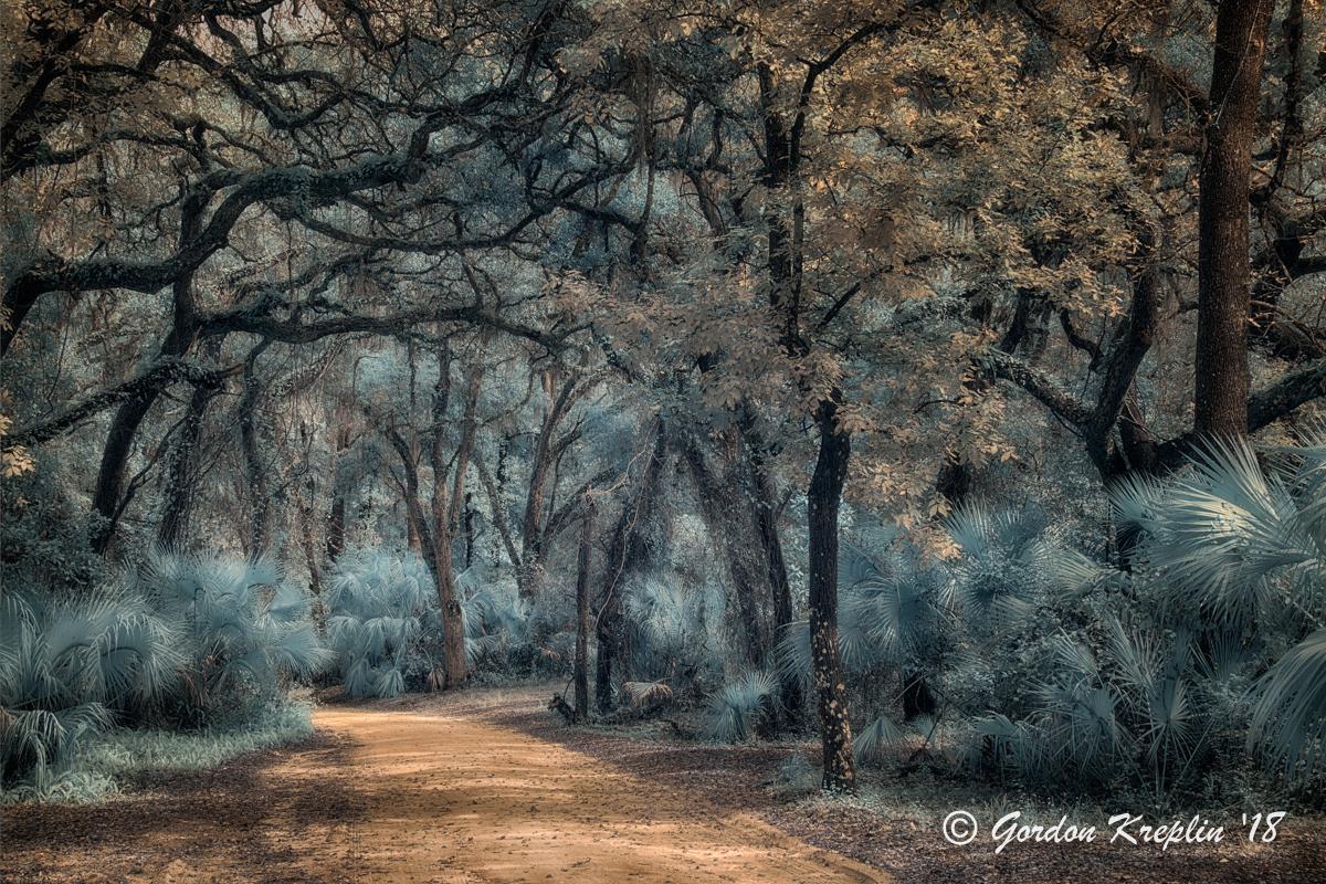 """Enchanted Forest"" copyright Gordon Kreplin 2018"