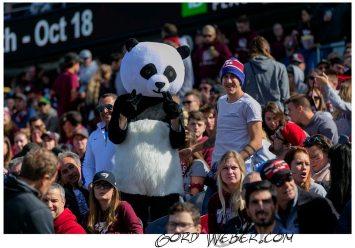 panda20170596