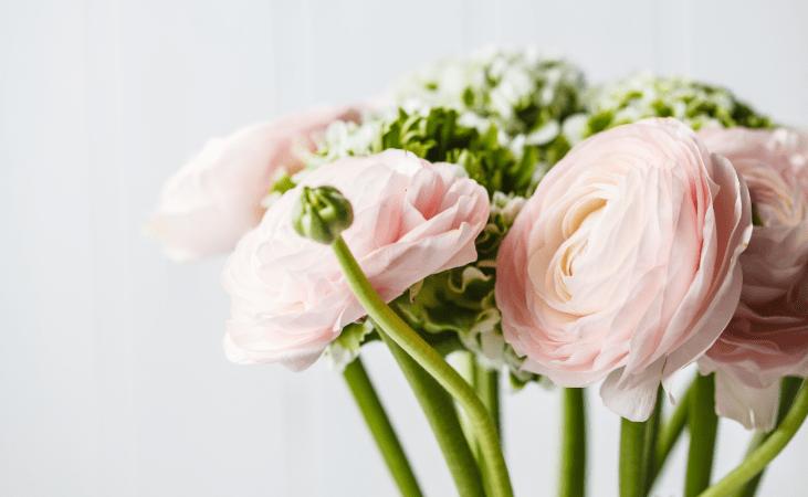 Ranunculus for Wedding