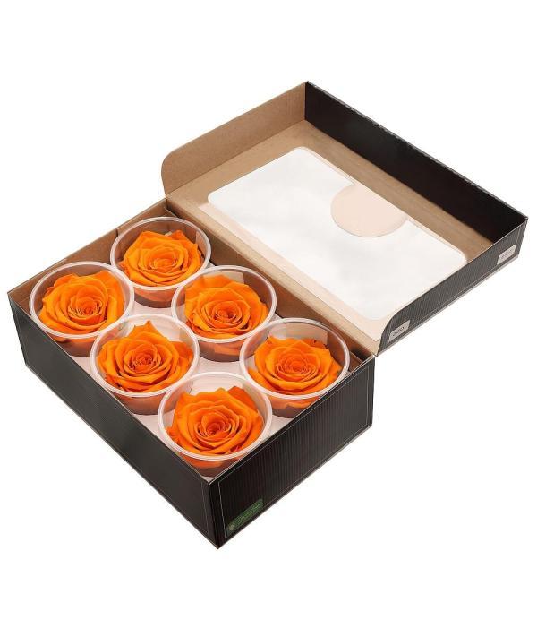single preserved rose buy online, single forever rose buy online,