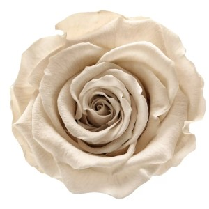 White roses order online, gorgeous flowers, gorgeous flowers Brooklyn,