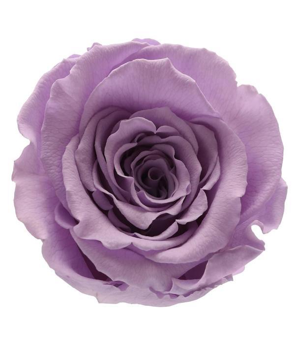 Order roses online