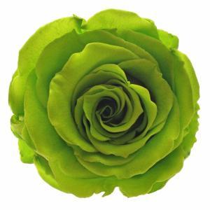 Best roses in Brooklyn buy
