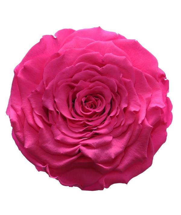 Roses of New York