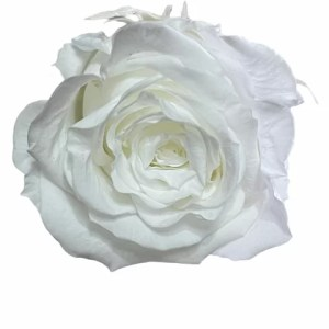 White roses, infinity roses