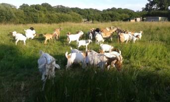 Summer grazing