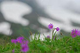 日本世界遺産一覧自然遺産知床