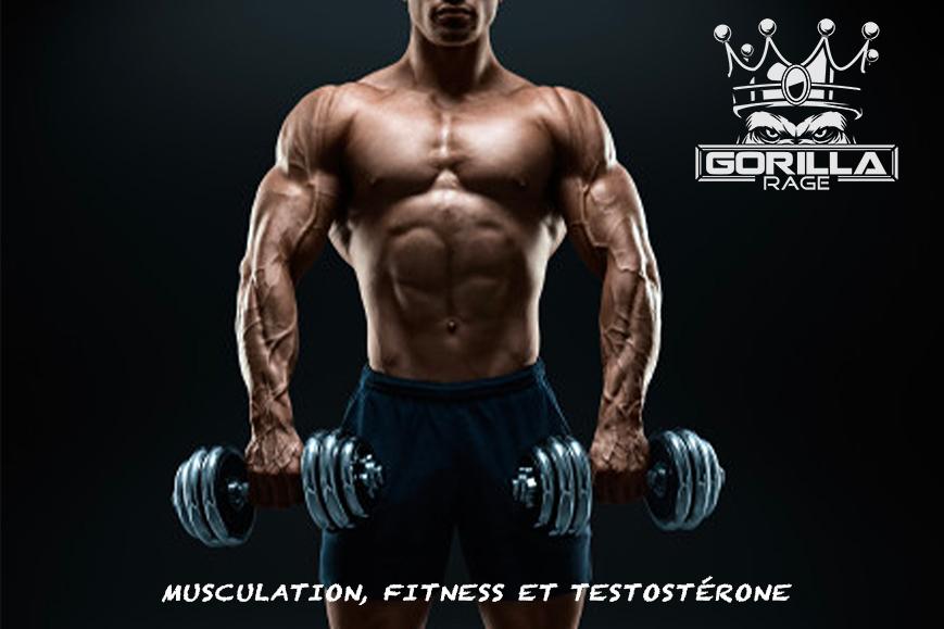 Musculation, Fitness et Testostérone