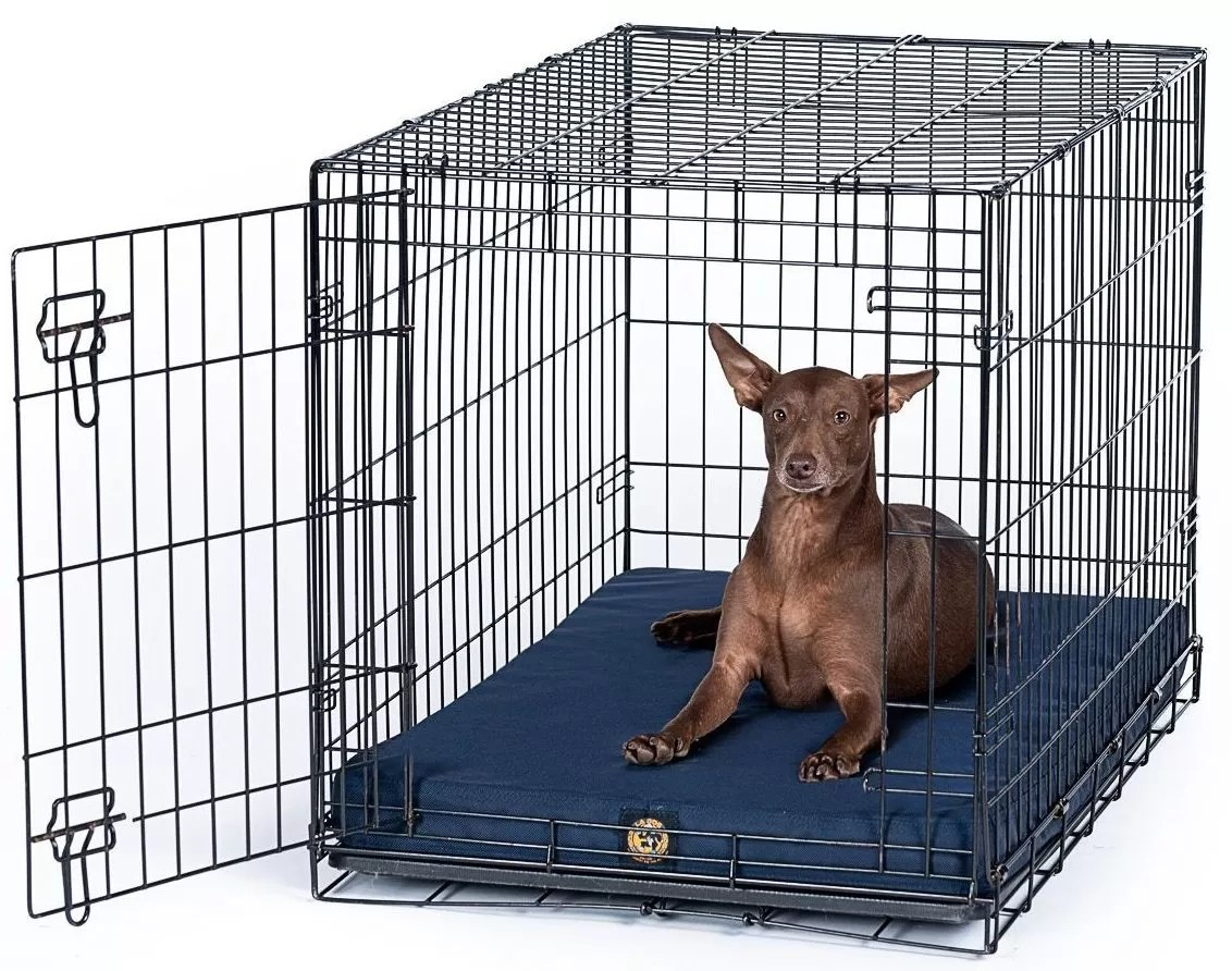 chew proof dog beds indestructible