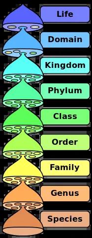 scientific classification