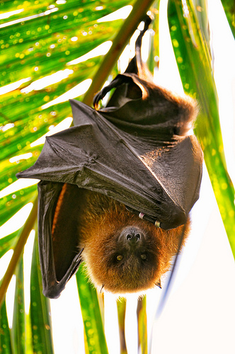 Don't Eat Fruit Bats, and Avoid Algae Blooms!