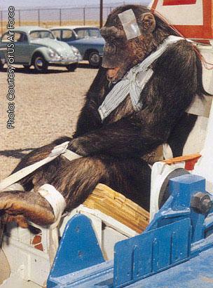 Institute of Medicine Questions Scientific Need for Chimpanzee Research