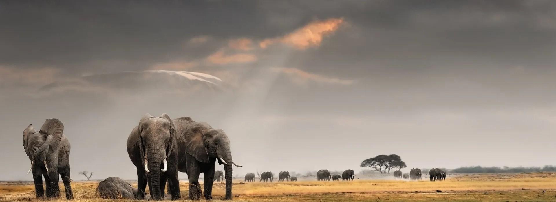 Africa Safaris - Elephants