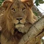 Best of Uganda Holiday Safari