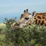 Uganda Pearl of Africa Safari