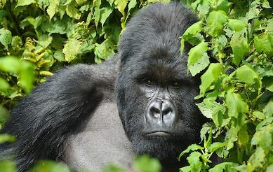 4 Days Double Rwanda Gorilla Trekking Safari Tour