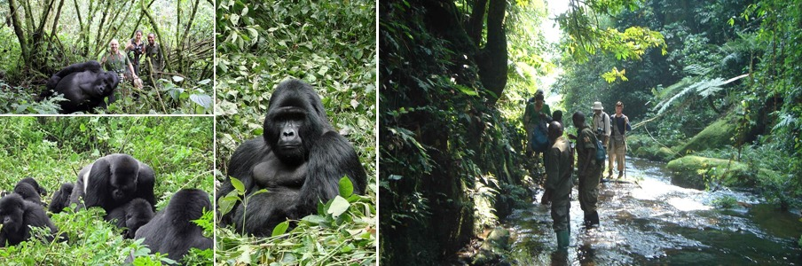 gorilla-trekking-bwindi-impenetrable-forest