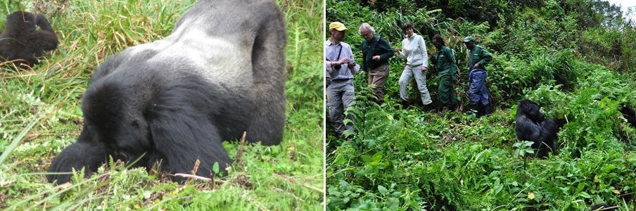 5 Days Gorilla and Chimpanzee tracking safari in Rwanda