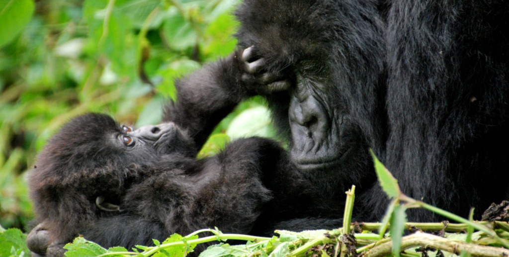 12 Days Gorilla Safari Uganda & Wildlife Safari tour in Uganda