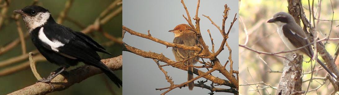 birding Akagera National Park