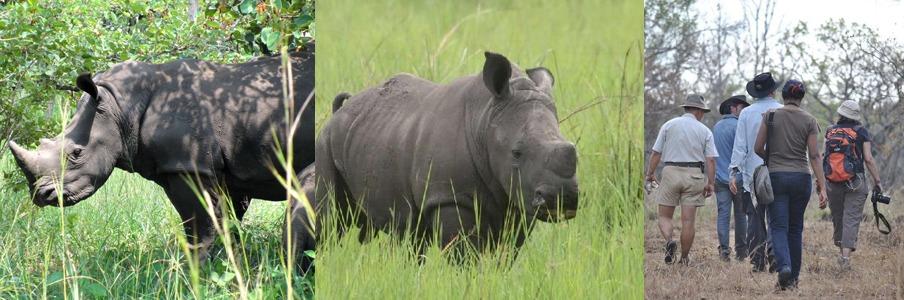 ziwa rhinos tour