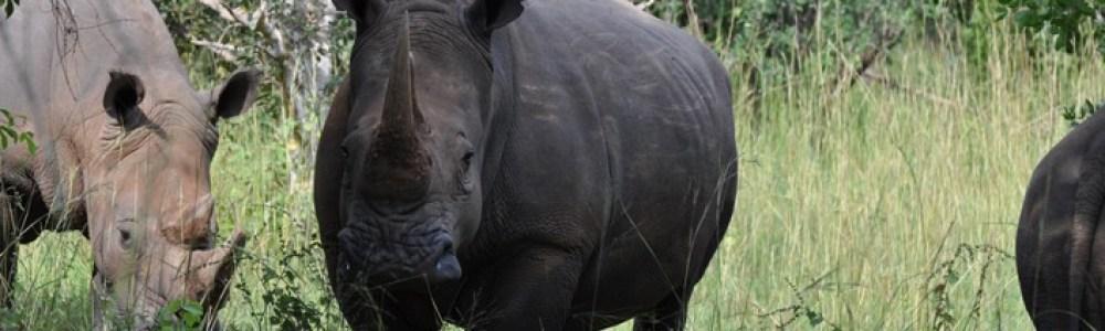 15-days-rwanda-uganda-gorilla-trekking