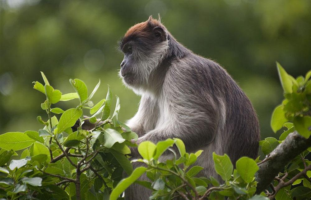 6 Days Uganda Wildlife and Chimpanzee Trekking Safari