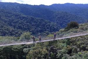 5 days gorilla safari in Rwanda to Volcanoes national park and Nyungwe canopy walk