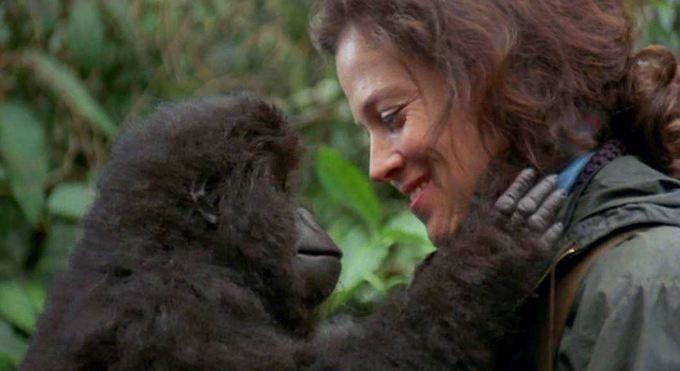 The 'Dian Fossey: Secrets in the Mist