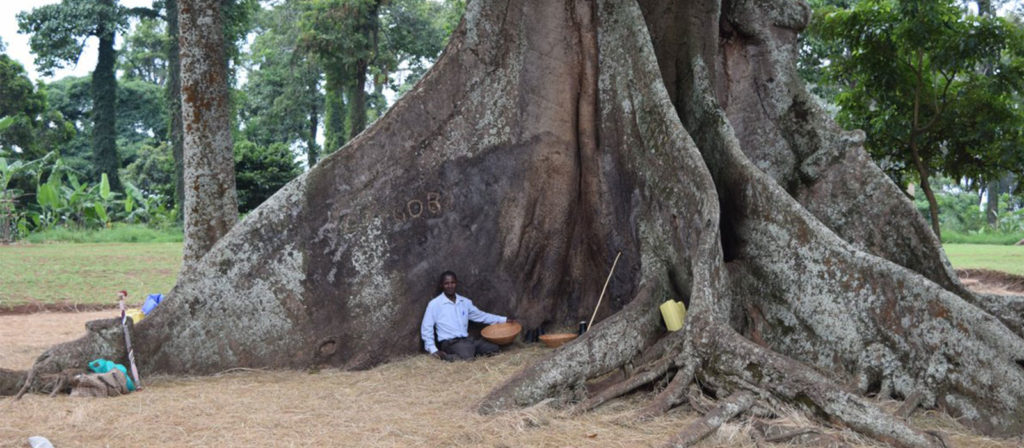 Nakayima tree en route