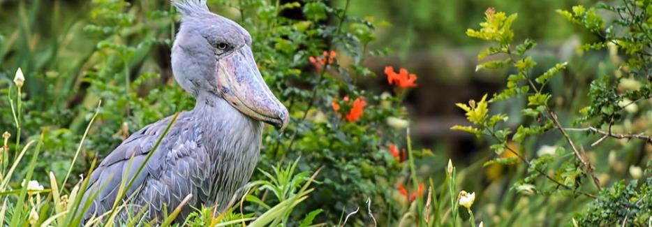 Rwanda Birding Safaris
