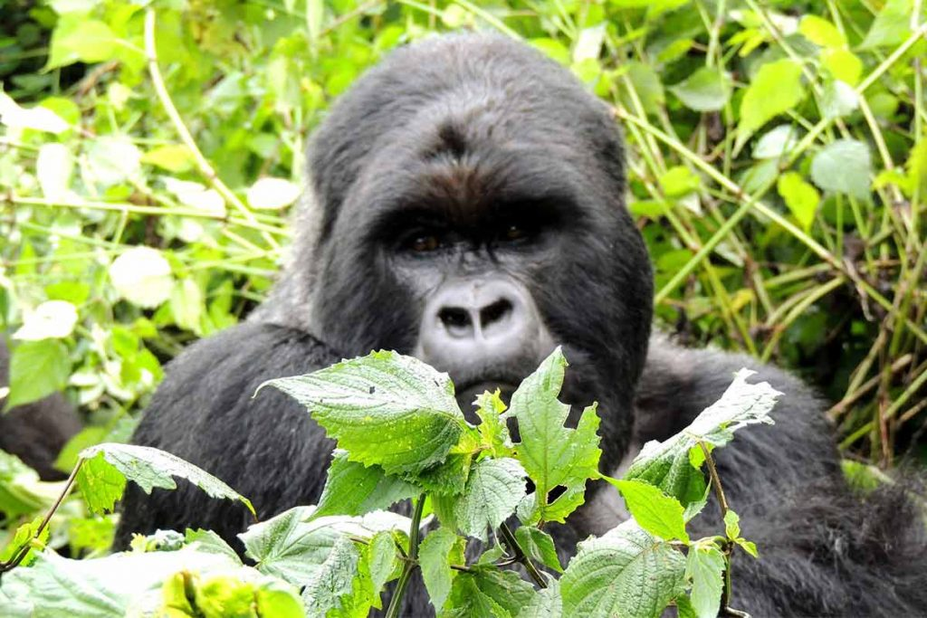 9 Days Uganda Wildlife & Gorillas of the Virungas