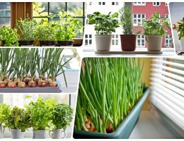 Что можно выращивать на подоконнике зимой? Витаминный огород