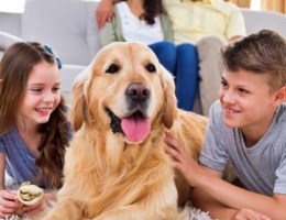 Лучший возраст для покупки собаки ребенку