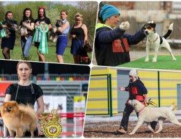 Начинается очередная подготовка к выставке собак 2021 в Каменске-Уральском