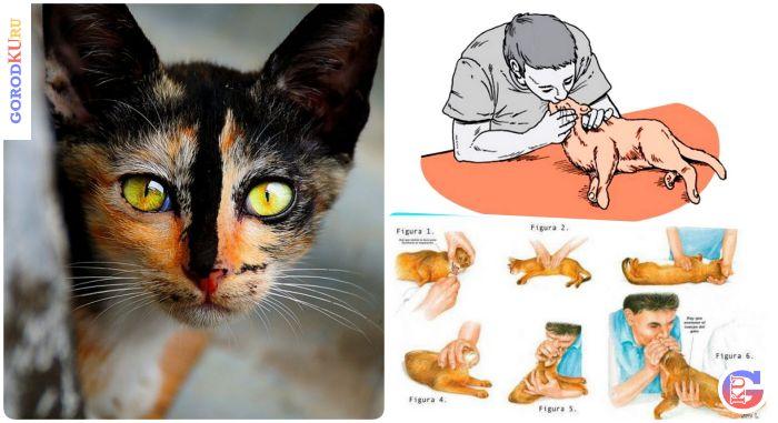 Искусственное дыхание кошке