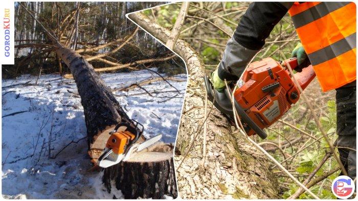 Охрана городских лесов Каменск-Уральского ГО