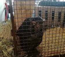 Руководитель зоопарка выразил благодарность волгоградским полицейским за оказанную помощь