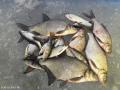 Селигерский улов