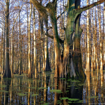The wild, beguiling beauty of the Deep South in the Woodruff Co. wetlands