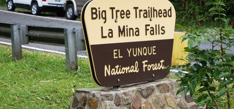 La Mina Waterfall and Big Tree Trail – El Yunque