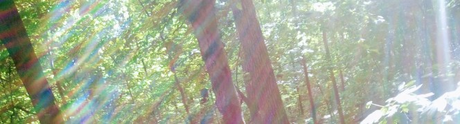 Sunlight through the trees in summer. Copyright Catherine Goshen 2017