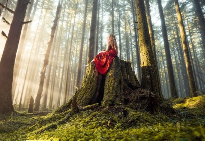 Lady on tree stump looks into the forest light. Courtesy of Wallup.net.