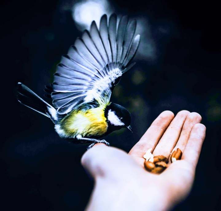 A Bird in the Hand by Taneli Lahtinen