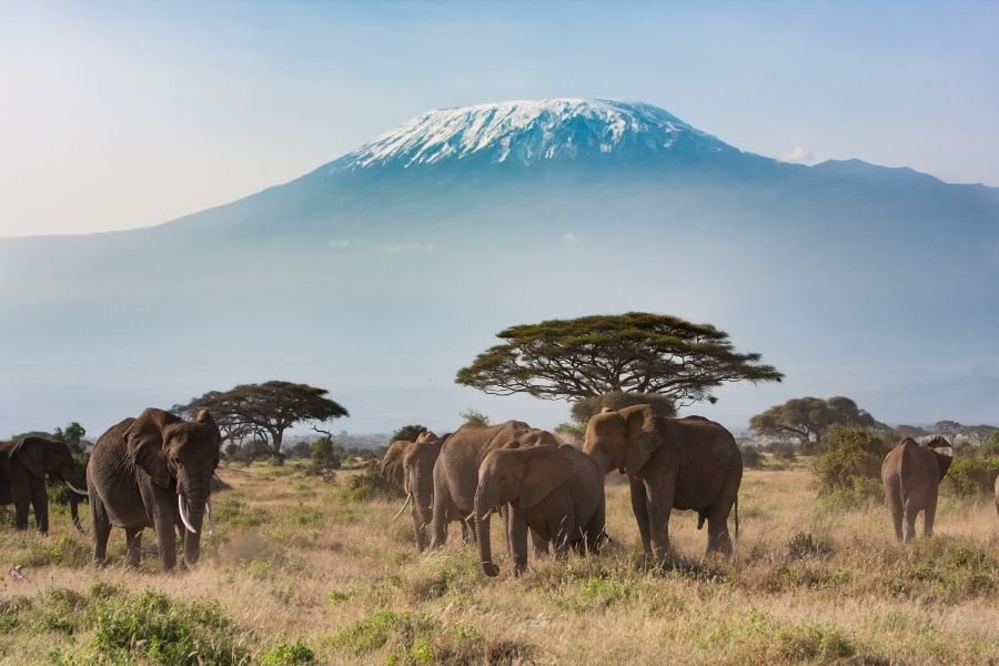 Kenya attractions elephants in Amboseli national park