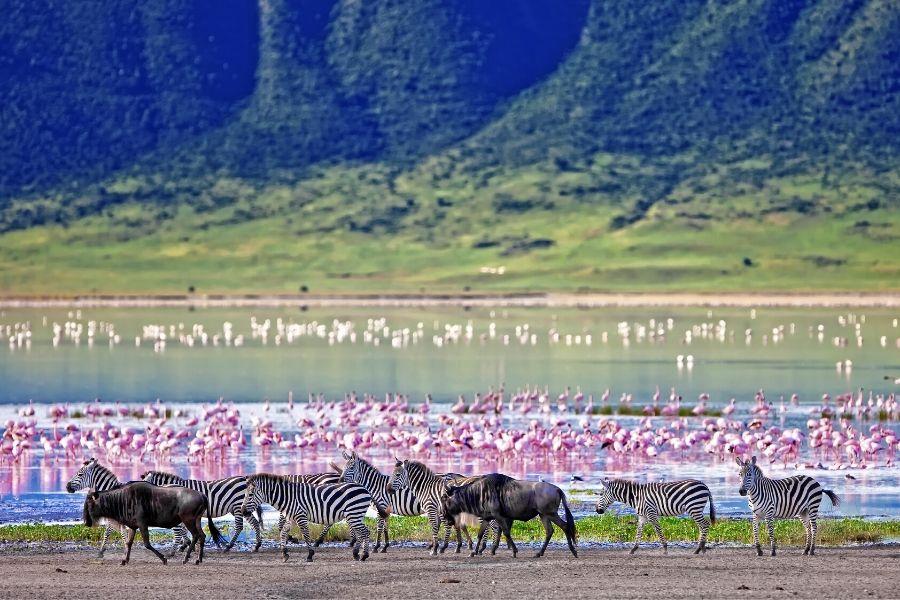 Kenya attractions different animals in lake nakuru